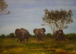 olifanten tom_1600x1148.jpg