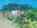 schapen hunnenbed 1_1600x1200.JPG
